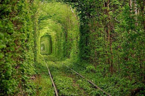 Туннель любви в поселке Клевань, невдалеке от украинского города Ровно.