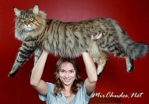 Натали Четтле (Natalie Chettle) с 9-килограммовым питомцем