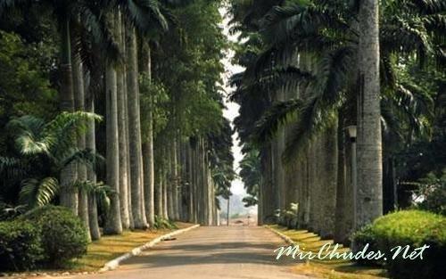 Ботанический Сад Абури — одно из самых известных, красивых и ярких мест в Гане.