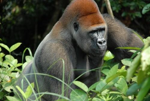 Национальный парк Одзала — одна из наибольших тропических экосистем Африки.