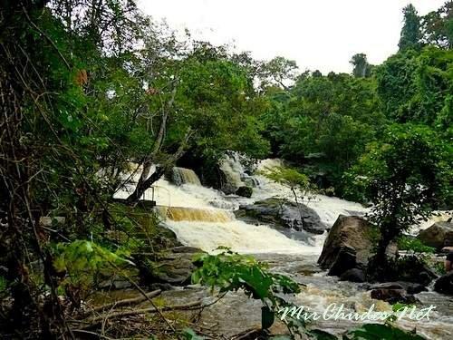 Национальный парк Сапо — является единственным национальным парк в Либерии и занимает второе место по площади девственных тропических лесов в Западной Африке после Национального парка Таи в Кот-д'Ивуар.