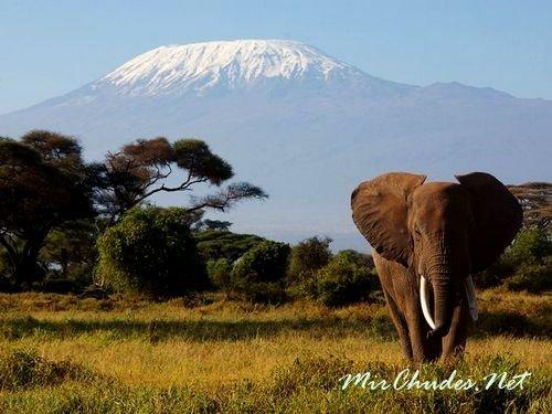 Килиманджаро — потенциально активный стратовулкан на северо-востоке Танзании. Является самой высокой точкой Африки и возвышается на 5 895 метров над уровнем моря.