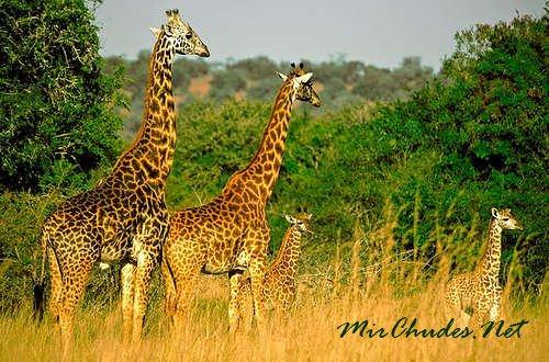 Национальный парк Кагера — природная достопримечательность и национальная гордость Руанды.