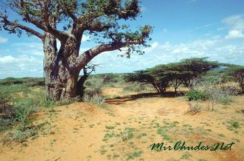Национальный парк Кисмайо — один из самых популярных парков юго-западного региона Сомали.