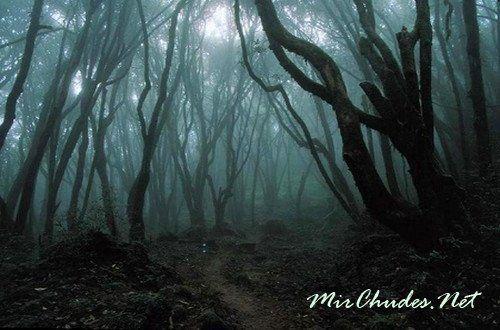 Аокигахара (Равнина зеленых деревьев) - самое популярное место среди самоубийц в Японии.
