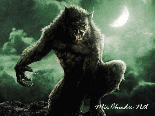 Оборотень или человек-волк был популярен в легендах всех народов мира.