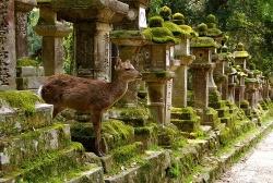 Нара — город  императорских оленей