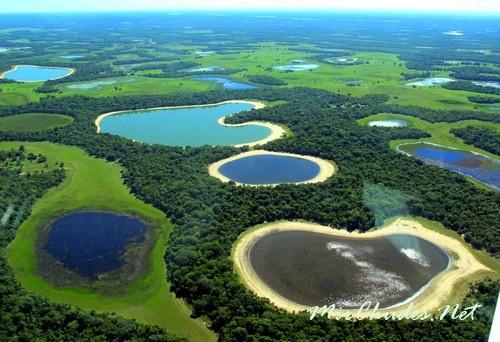 Во время дождей Пантанал превращается в озеро-болото, над поверхностью которого поднимаются острова и островки разных очертаний и размеров.