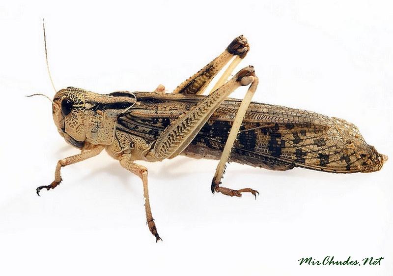 картинки cricket