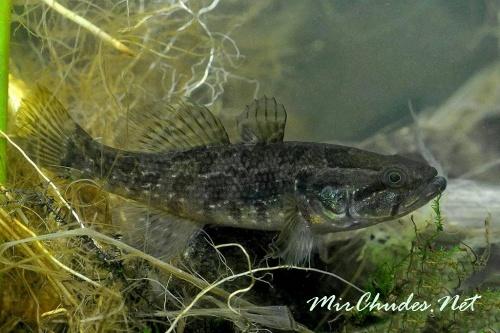 где клюет рыба в нижнем новгороде