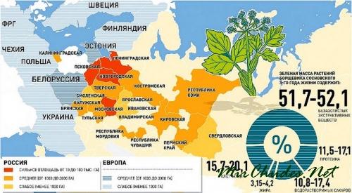 Распространив борщевика Сосновского на территории РФ и Европы.