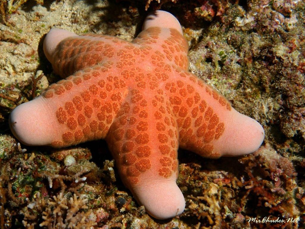 картинки морской звезды