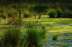 Череповецкие болота