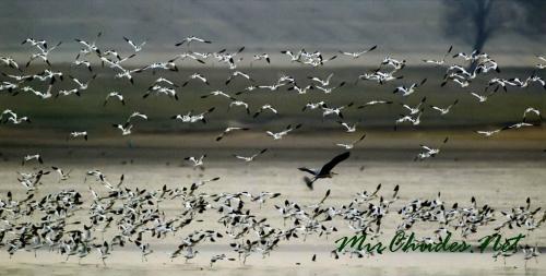 На озеро Дунтинху ежегодно слетаются тыся,tи перелетных птиц, среди которых есть и охраняемые законом КНР виды.