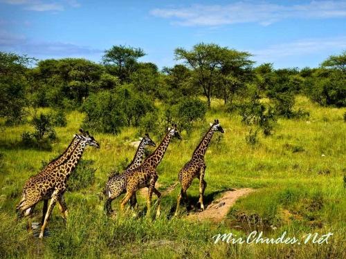 Серенгети — всемирно известный рай для животных.