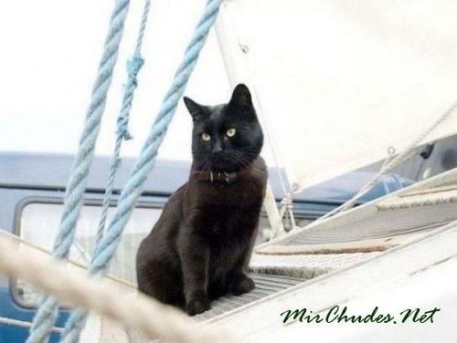 С кошками у моряков связано много примет и суеверий.